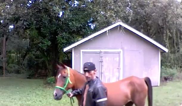 Florida man blames horse for home break-in